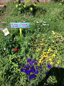 Photo taken at Marra Farms in Seattle's South Park neighborhood, during Lead Organizer Claudia Paras's Puget Sound Sage Port Toxics Tour of Seattle, 7/31/2014